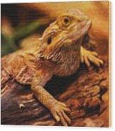 Lizard - Id 16217-202744-5164 Wood Print