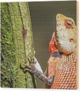 Lizard In Maldive Wood Print