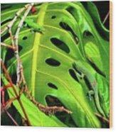 Lizard Licks  Wood Print