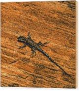 Lizard On Sandstone Wood Print