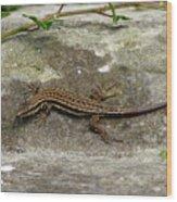 Lizard Tanning Wood Print