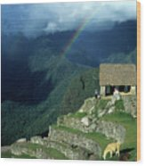Llama And Rainbow At Machu Picchu Wood Print