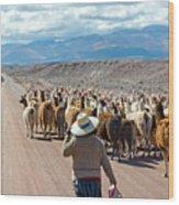 Llama Herd On Road Wood Print