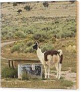 Llama Land Wood Print