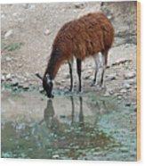 Llama Sip Wood Print