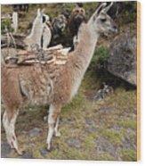 Llamas Carrying Firewood Wood Print