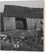 Lloyd-shanks-barn-4 Wood Print
