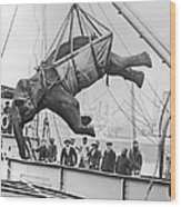 Loading Elephant, 1930s Wood Print