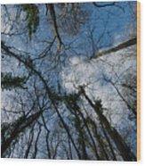 Loamhole Dingle Treetops Wood Print