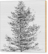 Loblolly Pine Wood Print by Jim Hubbard