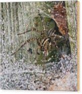 Lobo's Web Wood Print