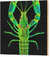Lobster Crawfish In The Dark - Greenlime Wood Print