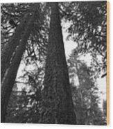 Lofty Tree Wood Print