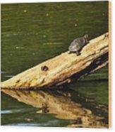Log Turtle L 3584 Wood Print