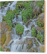 Logan Canyon Cascade Wood Print