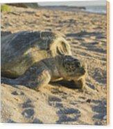 Loggerhead Sea Turtle Returning To The Ocean Wood Print