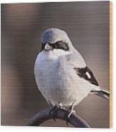 Loggerhead Shrike - Smokey Wood Print