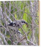 Loggerhead Shrike With Dinner Wood Print