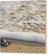 Loggerhead Turtle Hatchling 3 Delray Beach Florida Wood Print