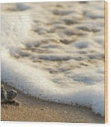 Loggerhead Turtle Hatchling 4 Delray Beach Florida Wood Print