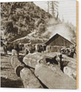 Logging With Oxen At A Saw Mill Sonoma County California Circa 1900 Wood Print