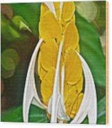 Lollipop Flower In Bourbon Resort Gardens Near Iguazu Falls National Park-brazil  Wood Print