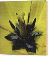 Lone Beauty - Tulip Wood Print