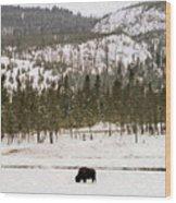 Lone Buffalo Wood Print