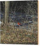 Lone Cardinal Wood Print