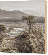 Lone Cypres Wood Print