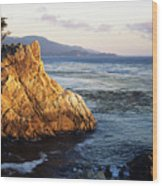 Lone Cypress Tree Wood Print by Michael Howell - Printscapes