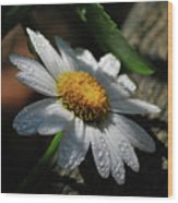 Lone Daisy Wood Print