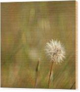 Lone Dandelion 2 Wood Print