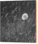 Lone Dandelion Black And White Wood Print by Jill Reger