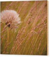 Lone Dandelion Wood Print