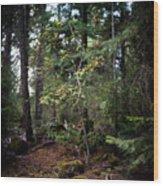 Lone Dogwood Wood Print