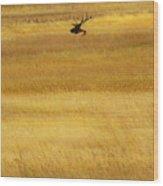 Lone Elk In Field Wood Print