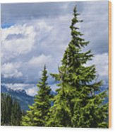 Lone Fir With Clouds Wood Print