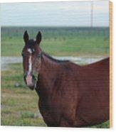 Lone Horse Wood Print