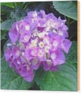 Lone Lilac Wood Print
