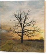 Lone Oak On The Marsh Wood Print