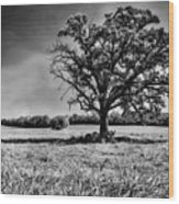 Lone Oak Tree In Black And White Wood Print