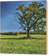 Lone Oak Tree In Wisconsin Field Wood Print