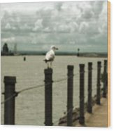 Lone Pier Seagull Wood Print