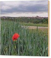 Lone Poppy Amongst Field Of Hops Wood Print