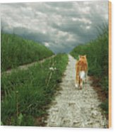 Lone Red And White Cat Walking Along Grassy Path Wood Print