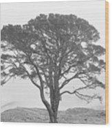 Lone Scots Pine, Crannoch Woods Wood Print