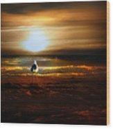Lone Seagull Wood Print