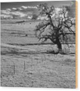Lone Tree And Cows 2 Wood Print