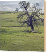 Lone Tree And Cows Wood Print